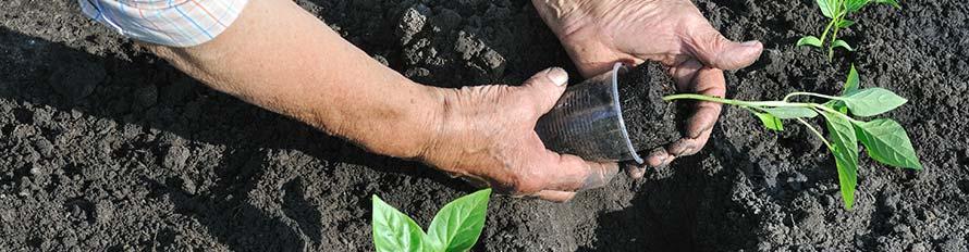 tuinaanleg beplanting aanleggen
