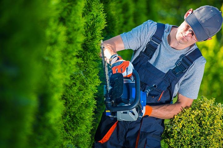 verzorging bomen